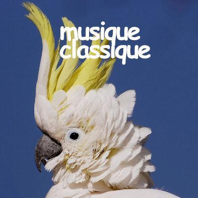 M-classique
